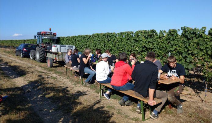 Frühburgunder Handlese im Weingut Kronenhof